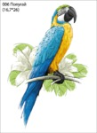 Арт. 006 (Попугай) Эластичный термотрансфер размер картинки 16,7*26