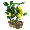 "70972 - Декоративное дерево ""Лимон"" h28см в горшке 15,5х9см h7см (Китай)"