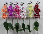 Орхидея миниатюрная