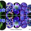 Слайдер-дизайн премиум Цветы ufl113