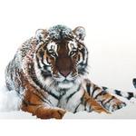 Мозаичная картина Тигр в снегу 38х48см AG451 полная квадрат