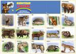 Плакат школьный Животные России 10-01-0014