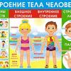 Плакат школьный Строение тела человека 070,416
