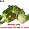 РХ Карамель Кузнечик / цена за 0,5 кг