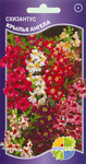 """СХИЗАНТУС """"КРЫЛЬЯ АНГЕЛА"""" Schizanthus wisetonensis mixed, Однолетник, в наличии 4 пакета"""