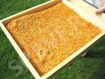 Пчелиная обножка (цветочная пыльца)