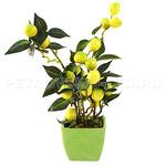 "66668 - Декоративное дерево ""Лимон"" h31см в горшке 9,5х9,5см h8см (Китай)"