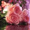 """РН GХ4478 """"Три розовых розы лежат"""" , 40х50 см Артикул827-353"""