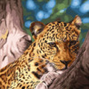 Картина-раскраска по номерам 40*50 GX 9987 Леопард