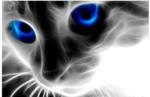 """Алмазная вышивка оптом """"Голубоглазый кот"""": xing140 (40x30)"""