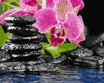 """РН GХ4482 """"Розовая орхидея и черные камни"""" , 40х50 см Артикул827-356"""