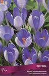 Крокус крупноцветковый Вангард