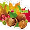 Открытка 10-10.02-0025 Листья и орехи