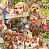 Картины по номерам 40*50 (большие), производитель Paintboy (Китай) GX 8728 Озорные щенки