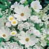 """Картина стразами """"Белые полевые цветы""""(АЖ-1195)"""