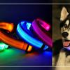 Светящийся ошейник для собак Luminous Collar for Dogs, размер M, голубой