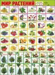 Плакат школьный Мир растений 0800199