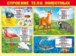Плакат школьный Строение тела животных 070,417