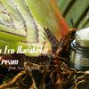 2 шт THE SAEM Urban Eco Harakeke Root Cream Sample Крем с экстрактом корня новозеландского льна