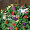 Перец Аладин ц/п  Сед острый декор. Дом+Сад