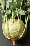 Капуста кольраби Венская Белая (Марс) Р (ранняя, стеблеплод до 2,5 кг, с сочная мякотью)