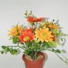 http://podsolnuh59.ru/catalog/cvety-v-gorshke/cvety_633929_podsolnuh__7_golov_gorshok__m1468_30sm/