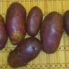 Картофель Чугунка 1 кг