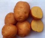 Картофель Солнечный 1 кг