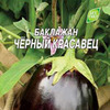 Баклажан Черный красавец