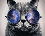 GX21679 Кот в очках