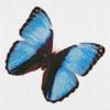 Бабочка Морфида тропическая