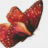Бабочка Красный монарх