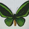 Бабочка Орнитоптера приам