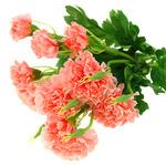 """Букет """"Гвоздика розовая"""" 34см"""