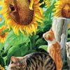 GX8247 Кошки в подсолнухах картина 40х50