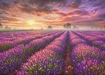 Картина по номерам «лавандовый закат»