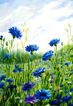 Картина по номерам «голубоглазые васильки на фоне неба»