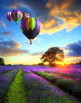 Картина по номерам Paintboy «воздушные шары над лавандовым полем»