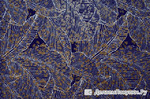 гипюр сетка 1221 синий+ коричневый (за 0,5 м)