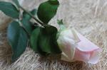 Роза закрытая
