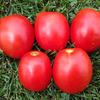 ТМ 10857 F1 семена томата детерм.., (Sakata / Саката)