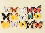 Стикеры для декора Бабочки