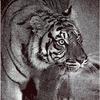 Махровое полотенце Тигр