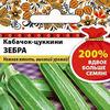 Зебра NEW 200% цуккини кабачок (НК)