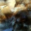 Обрезки лоскут меха блюфроста (за 0,5 кг)