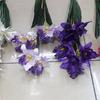 Орхидея цимбидиум 9 бутонов