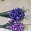 Орхидея цимбидиум 9 ответвлений