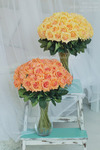 Роза малая оранжевая