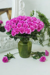 Роза малая сиреневая