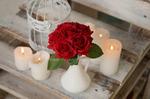 Букет из открытых роз